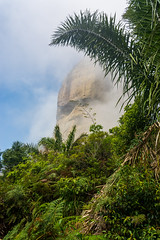 DSC_6002 (sergeysemendyaev) Tags: 2016 rio riodejaneiro brazil pedradagavea    hiking adventure best    travel nature   landscape scenery rock mountain    high  forest jungle trees green