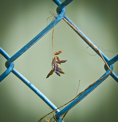 Just hanging around today. (Omygodtom) Tags: street blue wild nature fence spring nikon bokeh d7000 18105lens