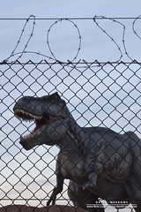 Do Not Feed The T-Rex (DMeadows) Tags: park fence t evening scotland wire dinosaur glasgow safety rex barbed carnivorous jurassic trex parr carnivore tyrannosaurus enclosure clydebank davidmeadows dmeadows davidameadows dameadows ifonlyihadrichardattenburghjeffgoldblumhererightnow ripprofessorputtersworth