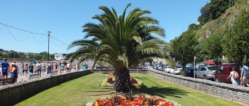 Hive Palm Beach