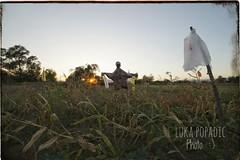 Scarecrow (Luka Popadi) Tags: pentaxart croatia trilj dalmacija ngc beautifulearth sunset summer outdoor natureshot scarecrow samyang14mm pentaxk1 light