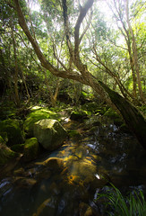 A creek runs through it (Jutta Sund) Tags: creek stream rocks water sunshine light moss australia bush