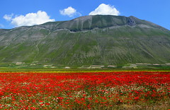 Mount Vettore and poppies (annalisabianchetti) Tags: mountains montagne paesaggio landscapes umbria pianadeimontisibillini poppies italy nature natura