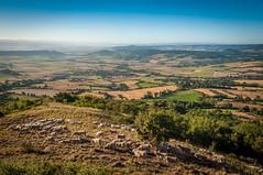 Troupeau de moutons sur le pic d'Ysson (_Jrme_) Tags: auvergne d90 nikon puydedme campagne extrieur moutons paysage picdysson sunrise troupeau vodable auvergnerhnealpes france fr