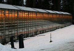 Greenhouses in Iceland (janroles) Tags: indoor iceland flickr canoneos400d greenhouse tomatoes cucumbers geothermalheat snow winter