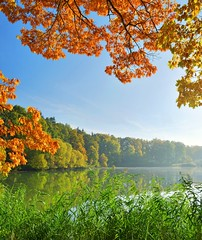 (       ) [:6]           .        . (   ) Tags: leaves bohemia natural park autumn view day clearing trees bright sunny light lake countryside season bush czech color fall colorful beauty rural outdoors sky scenic country scene beautiful ponds image nature environment bohemian landscape czechrepublic