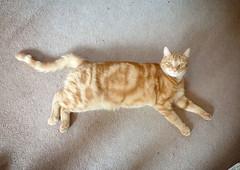 ginger layabout (buckaroo kid) Tags: london uk feline ginger orange tabby woody woodythecat sleeping snooze