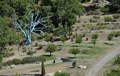 domaine de la verrière (jean-marc losey) Tags: france provence drôme lecrestet domaine viticole arbrebleu d700