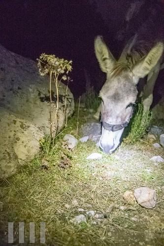 Pack donkey at night, Kulikalon, Fann Mountains, Tajikistan.