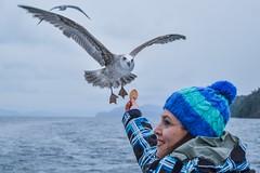 Seagull stearing (DanielHF36) Tags: vacaciones2016 bariloche seagull isla victoria gaviota argentina 2016 wildlife nahuel huapi