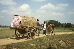 thakurgaon105 (Vonkenna) Tags: bangladesh thakurgaon seismicexploration cow cart purdah