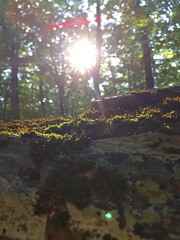 Moss in the woodlands (mikeliebler222) Tags: woodland woodlands sunrise forest deepwoods deep woods rayofsun sunset sunshine moss