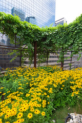 Urban Oasis (Viv Lynch) Tags: toronto nativechildandfamilyservices downtown urban city greenroof garden sacred design wildflowers plants botany ecology culture beautiful ontario canada firstnations collegestreet peace