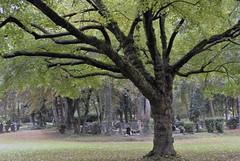 Friedhof Neurath (borntobewild1946) Tags: herbst nrw nordrheinwestfalen copyrightbyberndloosborntobewild1946 friedhof friedhofneurath neurath baum baumstamm zweige ste bltter laub herbstlaub