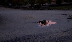 Wharton State Forest (elisecavicchi) Tags: reflection puddle pool evening dusk sunset dark obscure silhouette tree branches foliage wharton state forest new jersey pinelands national reserve gravel pathway road window blush