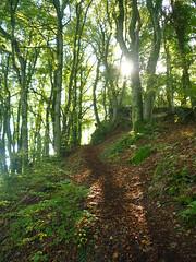 Mosenberg Trail (Jrg Paul Kaspari) Tags: manderscheid eifel vulkaneifel wanderung herbstwanderung diebergkraterseetour herbst autumn fall lavaklippe lavaklippen mosenberg buchenwald trail weg wanderweg