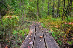 Autumn wetlands (mswan777) Tags: walkway wetlands swamp autumn fall nature season color leaf tree wooden michigan park nikon d5100 sigma 1020mm forest woods