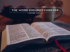1 Peter 1:24-25 (tcjakob) Tags: 1peter flesh grass man glory flower word endures forever gospel bible brown preached
