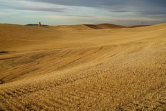 day's end... (Alvin Harp) Tags: palousescenicbyway palouse rollinghills goldenlight farming farm landscape nature naturesbeauty september 2016 sonyilce7rm2 fe24240mm alvinharp sooc