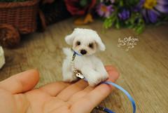 goober08 (Zhanna Zolotina) Tags: miniature dog ooak handmade toyzz tinydolhousetoyzz altair teddy bear dollhouse puppenhaus blythe
