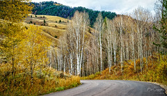 The road less traveled by... (Bob C Images) Tags: fall fallfoliage fallcolors leaves roads travel trees aspens jacksonhole wyoming