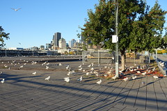 Seagulls @ Quai Jacques-Cartier @ Old Port @ Ville-Marie @ Montreal (*_*) Tags: montreal mtl canada quebec northamerica 2016 autumn fall october city sunny morning villemarie automne vieuxport oldport port pier quai jacquescartier