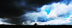 Bad news (alokD7200) Tags: clouds weather thunder storm badweather rain wolken wolk onweer nederland holland weer weerfoto weatherpicture regen lucht skies sky blue summer2016 nikon d7200 nikond7200 beginner amateur tree sad dark daylight