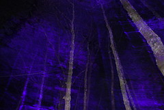 Enchanted Forest (goatsgreetings) Tags: enchantedforest faskallywood perthshire pitlochry scotland sound light art outdoorart forest woods night dark atmospheric