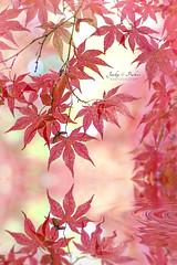 Autumn Colours (Jacky Parker Floral Art) Tags: foliage leaves red portrait format slective focus reflection autumn colours
