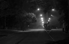 Morning Walks with Toby 0382 (cbonney) Tags: morning walks with toby dog streetlights night sunrise dawn fog mist
