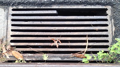 PA152649 (bicyclehazard) Tags: cast iron storm drain grate bicyclehazard