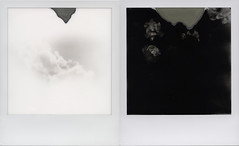 The white and the black ('roid week Fall 2016 - 05) (ale2000) Tags: roidweek impossible i1 roidweek2016 roidweek2016falledition polaroidweek bw black white blackandwhite bianco nero bn e diptych dittico sky cielo clouds nubi nuvole roses flowers minimal minimalistic juxtaposed contrario opposites attraction opposite opposti contrasto contrasti bwitype