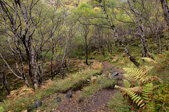Kirkaig In the Autumn (Tom_Drysdale) Tags: loch assynt silver lochiver birch fern october drum 2016 ross autumn wester suilven kirkaig westerross light