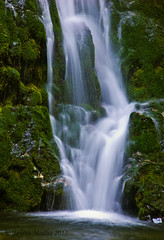 Madison Creek Falls (Jayesh Modha) Tags: water waterfall waterfalls olympicnationalpark nikond90 18105mmf3556gvr nikon18105vrlens jayeshmodha jayeshmodhanikond90 waterfallofwashingonstate nikon18105mmf3656gvrlens nikon18105mmf3556gvrlens olympicnationalparkwaterfalltrail olympicpeninsulawaterfalltrail