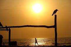 Keep Running (seeveeaar) Tags: lighting street morning light sun india man beach photography action running keep framing chennai silhoutte tamilnadu nagar besant elliots