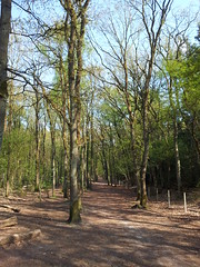20130505_165505 (MelisaTG) Tags: cameraphone trees woods urbanwoods greenleafs