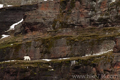"Mountain Goat • <a style=""font-size:0.8em;"" href=""http://www.flickr.com/photos/63501323@N07/8713110816/"" target=""_blank"">View on Flickr</a>"