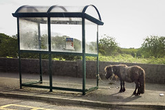 Horse (robives) Tags: horse bus stop cumbria workington