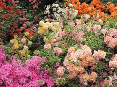 flowers at savil garden (linus_art) Tags: flowers nature colors beautiful beauty rural colours natural relaxing fresh multicolor multicolour