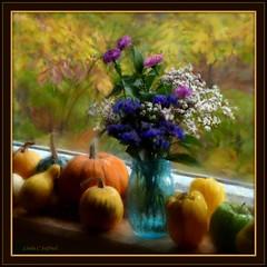 On the windowsill (edenseekr) Tags: flowers gourds vase windowsill pumkins oilpaintingeffect digitallypainted stilllifecomposition