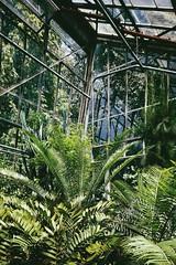 green planet (Kadrolog) Tags: plants leaves krakow botanicgarden krakw cracow licie palmiarnia roliny krakoff ogrdbotaniczny sonyxperia xperiaz3compact