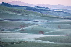 Frosty morning in West Otago (Ian@NZFlickr) Tags: frost rolling farmland west otago lawrence blue spur road nz