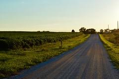 Crickets (John Dame) Tags: nebraska corn b1b farm countryroads cornrows church harvest
