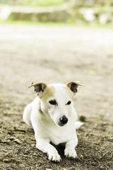DSC_8478 (timo_holinka) Tags: hund dogs sonne bokeh offenblende 50mm nikon d3200 shooting