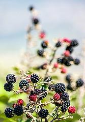 blackberry time (Angelo Petrozza) Tags: blackberry more fruit frutti bosco sottobosco wood bokeh focus manuallens pentax