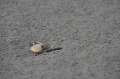 traverse du Mont st Michel 2016 (xavfoto14) Tags: mt st michel baie pelerins