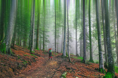 misty forest (ckiro_niku) Tags: forest mist fog man travel traveller photographer landscape green abstract road nature romania negoiu leaf red