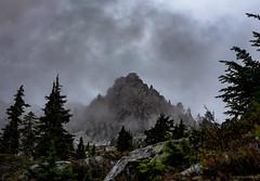 Pilchuk 1418 160904 (jetcitygrom) Tags: tree wood mist fog cascades mount pilchuk ricoh gr 28mm wide angle washington landscape