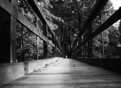 Walking on a bright side (velvetmeadow) Tags: blackandwhite bw monochrome monochromebokehthursday hmbt bridge suspensionbridge walking dog choice alternative juxtaposition grainy velvetmeadow