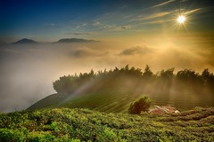 Sunset at tea farm  (Vincent_Ting) Tags:   teafield  sunset  seaofclouds  fog misty tea    taiwan   clouds tree sky   vincentting   startrails